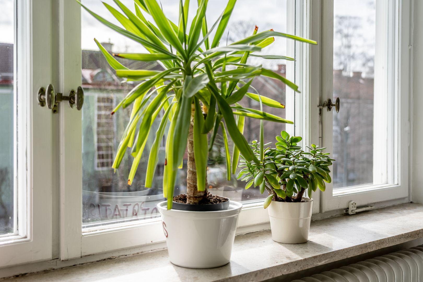 Fönster med utsikt mot innergården