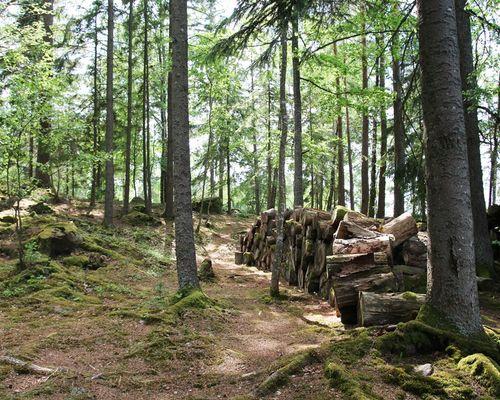 Skogen mitt på ön