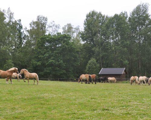 hästar toftahult