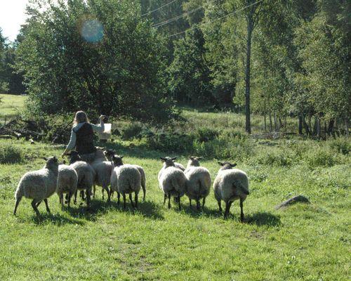 fårpågården