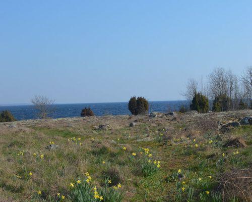 Naturskön miljö invid havet