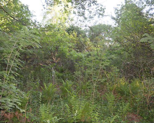 Uppvuxen tomt där ni kan bevara en del träd