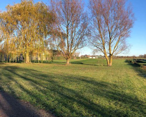 Grönområdet bredvid tomterna