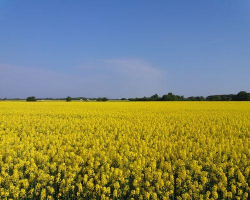 Närmaste granne är fält, som på våren lyser av vackra rapsfält.