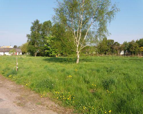 Båda tomterna har små träd