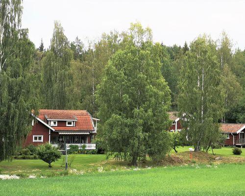 Närbild från Åkern