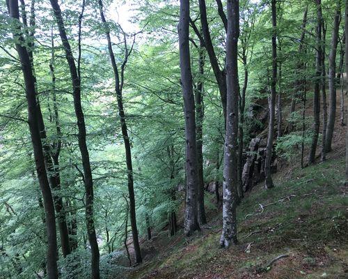 Bild ifrån Söderåsen naturreservat